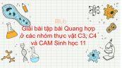Giải bài tập SGK Sinh học 11 Bài 9: Quang hợp ở các nhóm thực vật C3, C4 và CAM