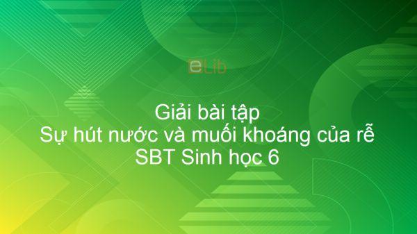 Giải SBT Sinh 6 Bài 11: Sự hút nước và muối khoáng của rễ