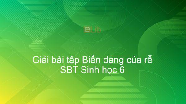 Giải SBT Sinh 6 Bài 12: Biến dạng của rễ