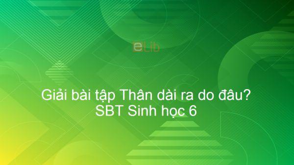 Giải SBT Sinh 6 Bài 14: Thân dài ra do đâu?