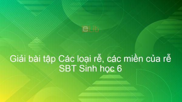 Giải SBT Sinh 6 Bài 9: Các loại rễ, các miền của rễ