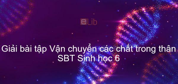 Giải SBT Sinh 6 Bài 17: Vận chuyển các chất trong thân