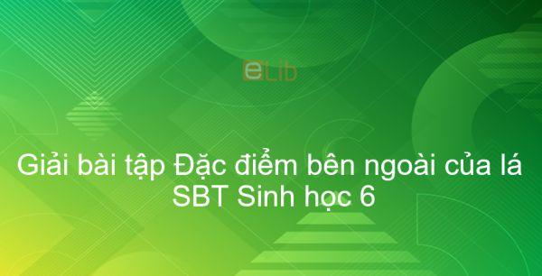 Giải SBT Sinh 6 Bài 19: Đặc điểm bên ngoài của lá