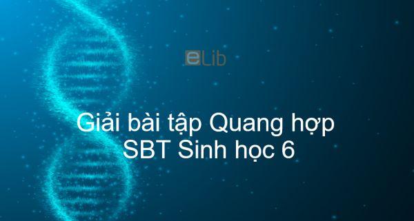 Giải SBT Sinh 6 Bài 21: Quang hợp