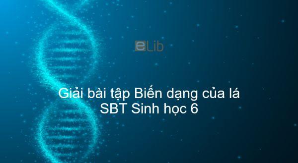 Giải SBT Sinh 6 Bài 25: Biến dạng của lá