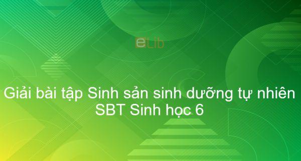Giải SBT Sinh 6 Bài 26: Sinh sản sinh dưỡng tự nhiên