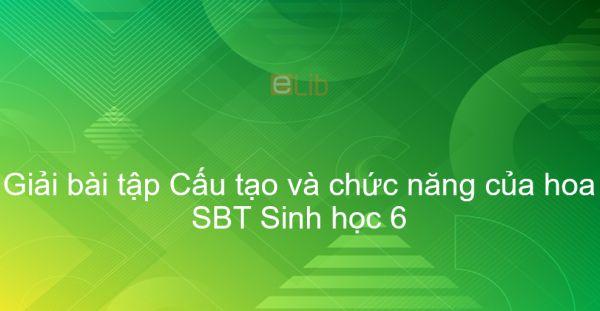 Giải SBT Sinh 6 Bài 28: Cấu tạo và chức năng của hoa