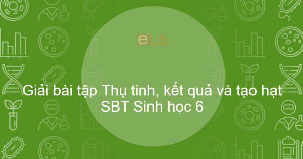 Giải SBT Sinh 6 Bài 31: Thụ tinh, kết quả và tạo hạt