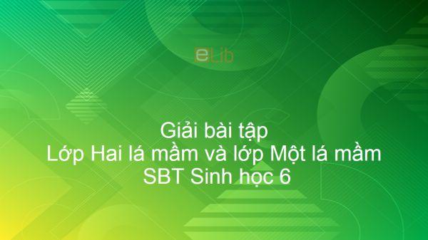 Giải SBT Sinh 6 Bài 42: Lớp Hai lá mầm và lớp Một lá mầm