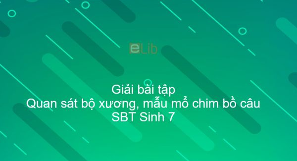 Giải SBT Sinh 7 Bài 42: Thực hành: QS bộ xương, mẫu mổ chim bồ câu