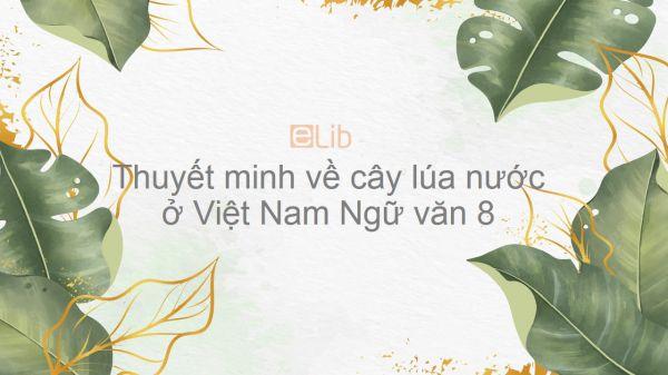 Thuyết minh về cây lúa nước ở Việt Nam