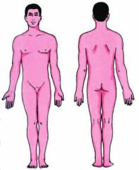Cơ thể người