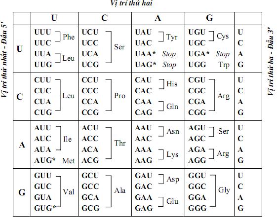 Bảng mã bộ ba mã hóa axit amin