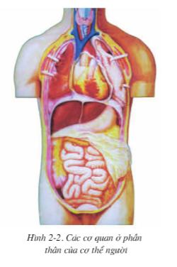 Hình 2.2 Các cơ quan ở phần thân