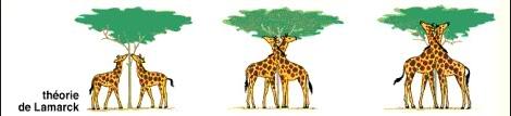Quan điểm của Lamack về sự hình thành loài hươu cao cổ