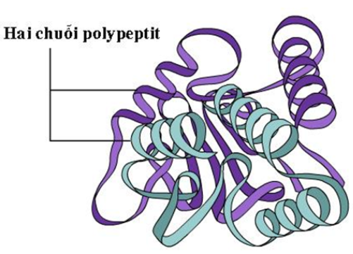 Figure 18.5 Quaternary Protein Structure