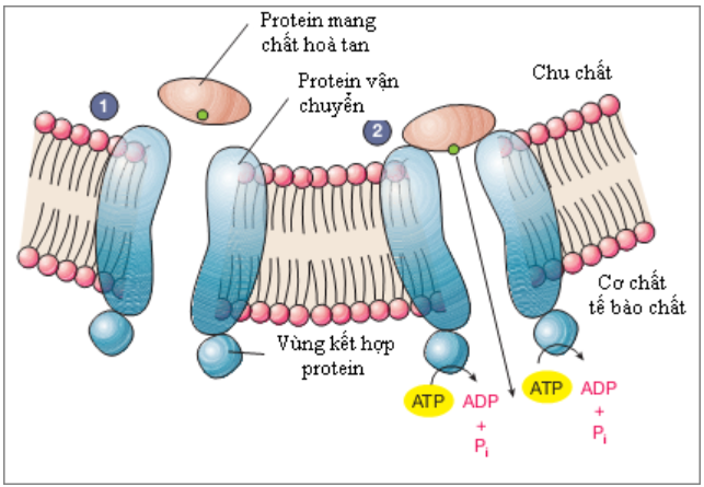 Figure 18.6 Structural Functions of Proteins