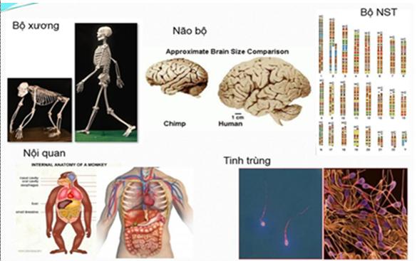 Bằng chứng về nguồn gốc động vật của loài người
