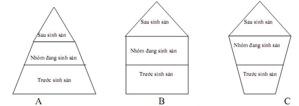 Các dạng tháp tuổi