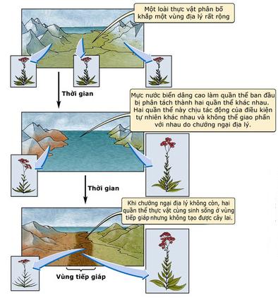 Hình thành loài bằng con đường địa lí ở thực vật
