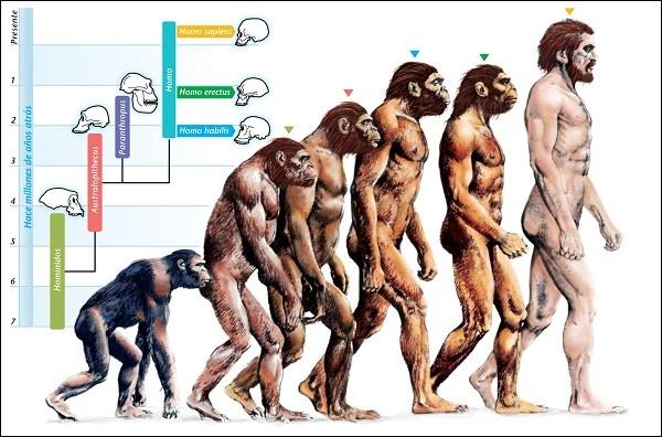 Quá trình tiến hoá của loài người