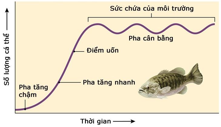 Sự tăng trưởng kích thước của quần thể cá trong môi trường bị giới hạn