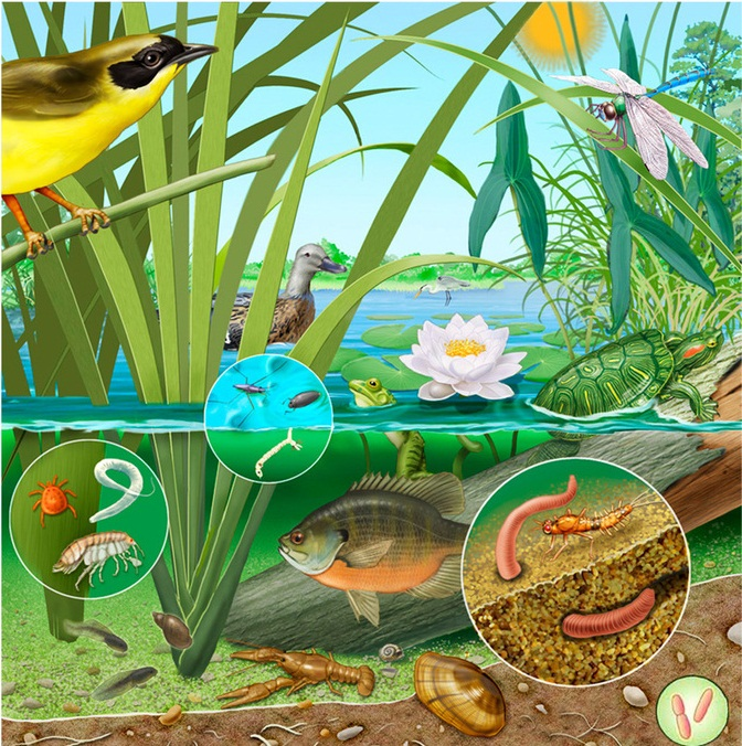 Hệ sinh thái ao hồ