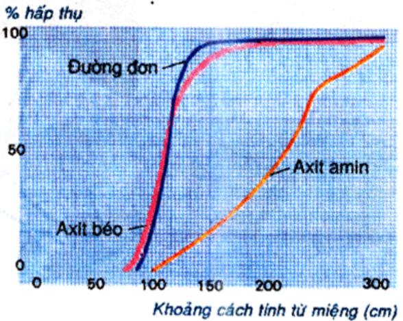 Hình 29.2 Đồ thị phản ứng mức độ hấp thụ các chất ở ruột non