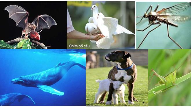 Những con vật có thể phát và cảm nhận sóng hạ âm, siêu âm
