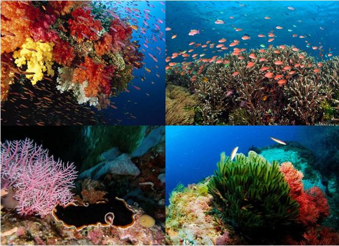 Vẻ đẹp tự nhiên từ san hô
