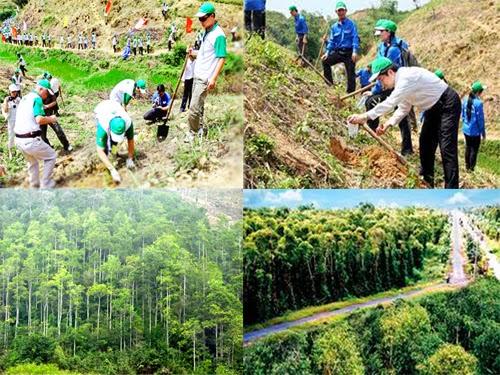 Hoạt động trồng cây gây rừng