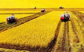 Nghề trồng lúa ở đồng bằng sông Cửu Long