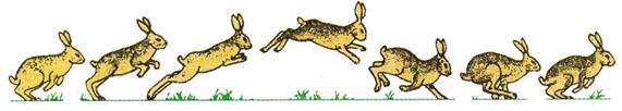 Di chuyển của thỏ