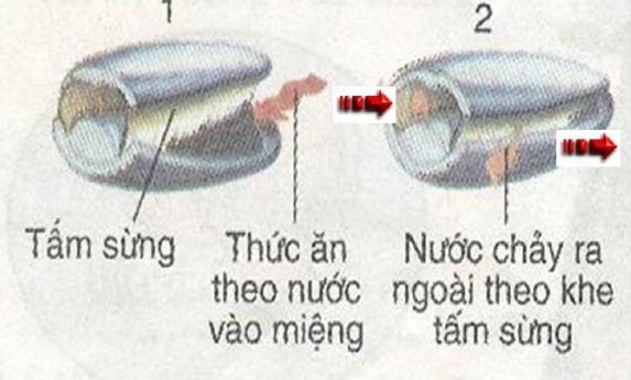 Quá trình lấy thức ăn của cá heo