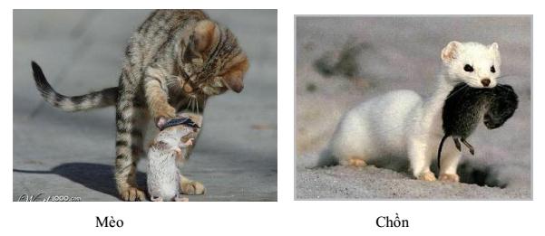 Tiêu diệt 1 số động vật gặm nhấm có hại