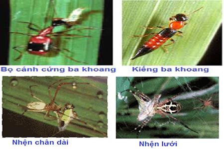 Một số loài thiên địch