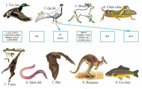 Các hình thức di chuyển ở động vật