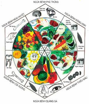 Vai trò của vitamin