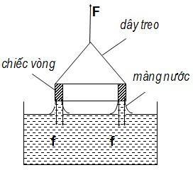 Dây treo, chiếc vòng và màng lưới