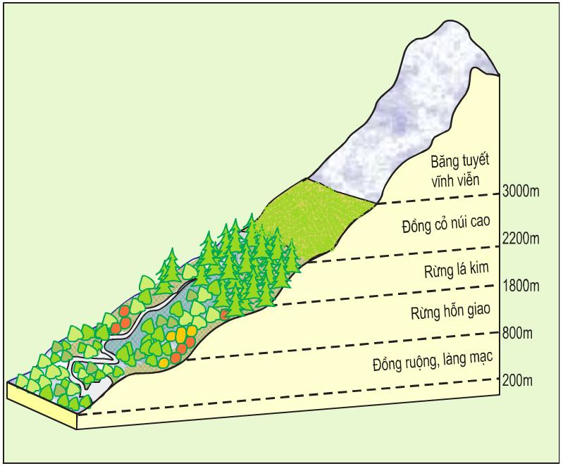 Sơ đồ phân bố thức vật theo độ cao của dãy An-pơ