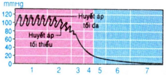 Hình 18.1 Đồ thị sự biến đổi huyết áp trong hệ mạch của vòng tuần hoàn lớn