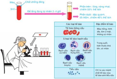 Hinh 13.1 Thí nghiệm tìm hiểu thành phần cấu tạo của máu