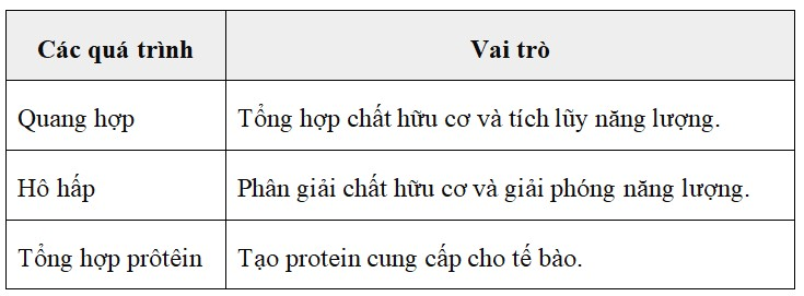 Bảng 65.4. Các hoạt động sống của tế bào