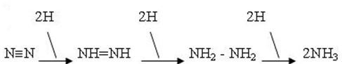 Qúa trình cố định nitơ