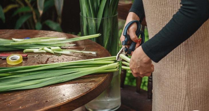 Cách cắt hoa lay ơn