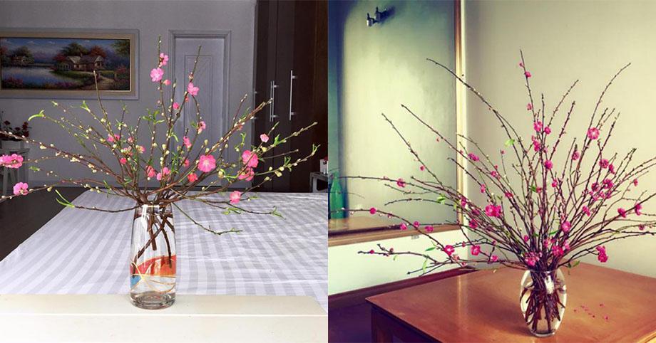 Cách chọn hoa đào